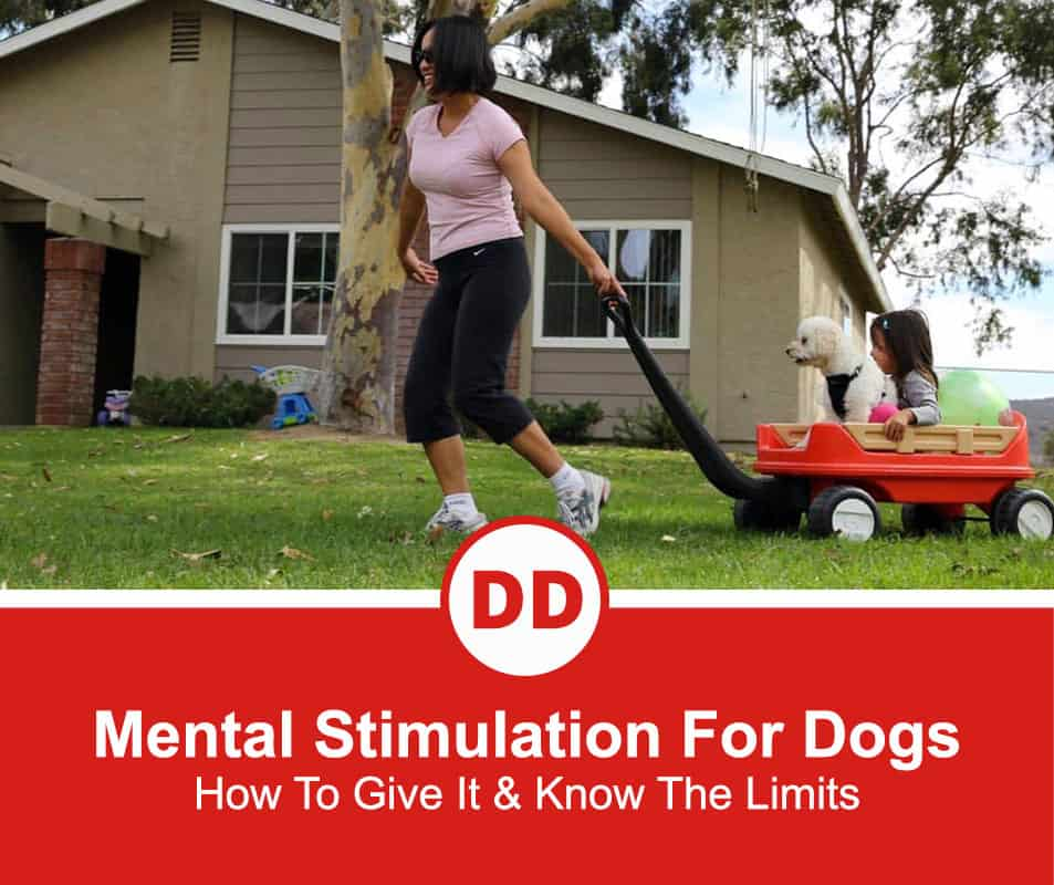 Mental-Stimulation-For-Dogs