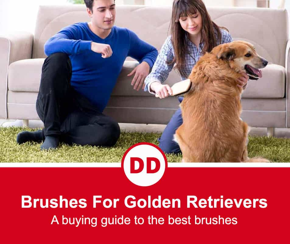 image of golden retriever being brushed