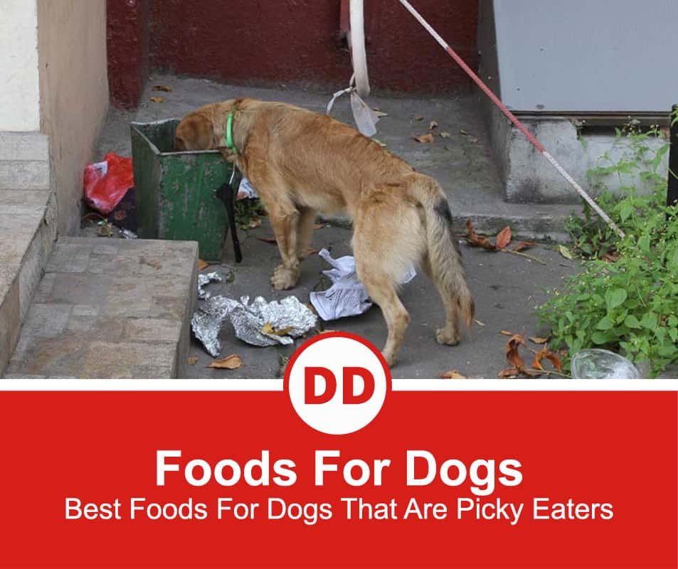 Best-Foods-For-Dogs-That-Are-Picky-Eaters