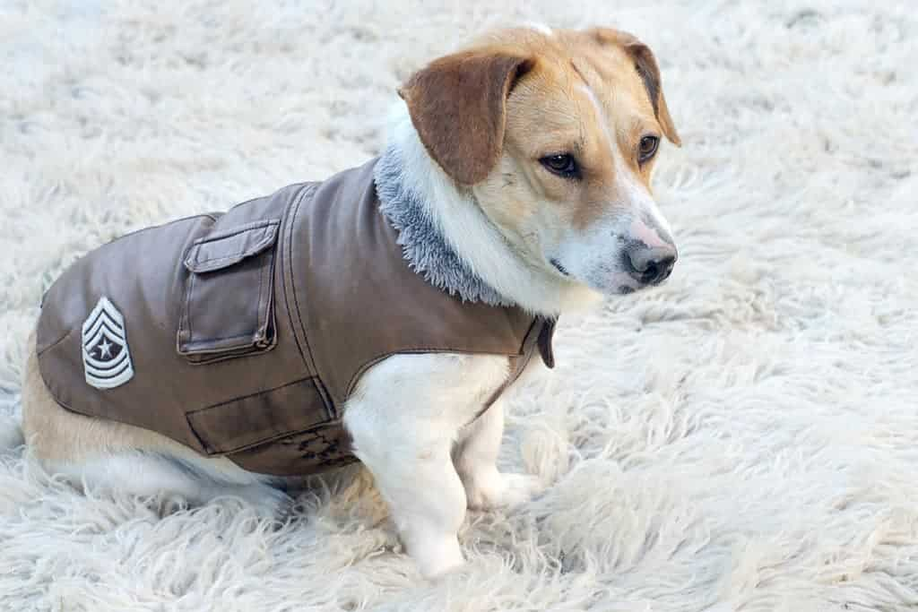 image of cute dog in jacket