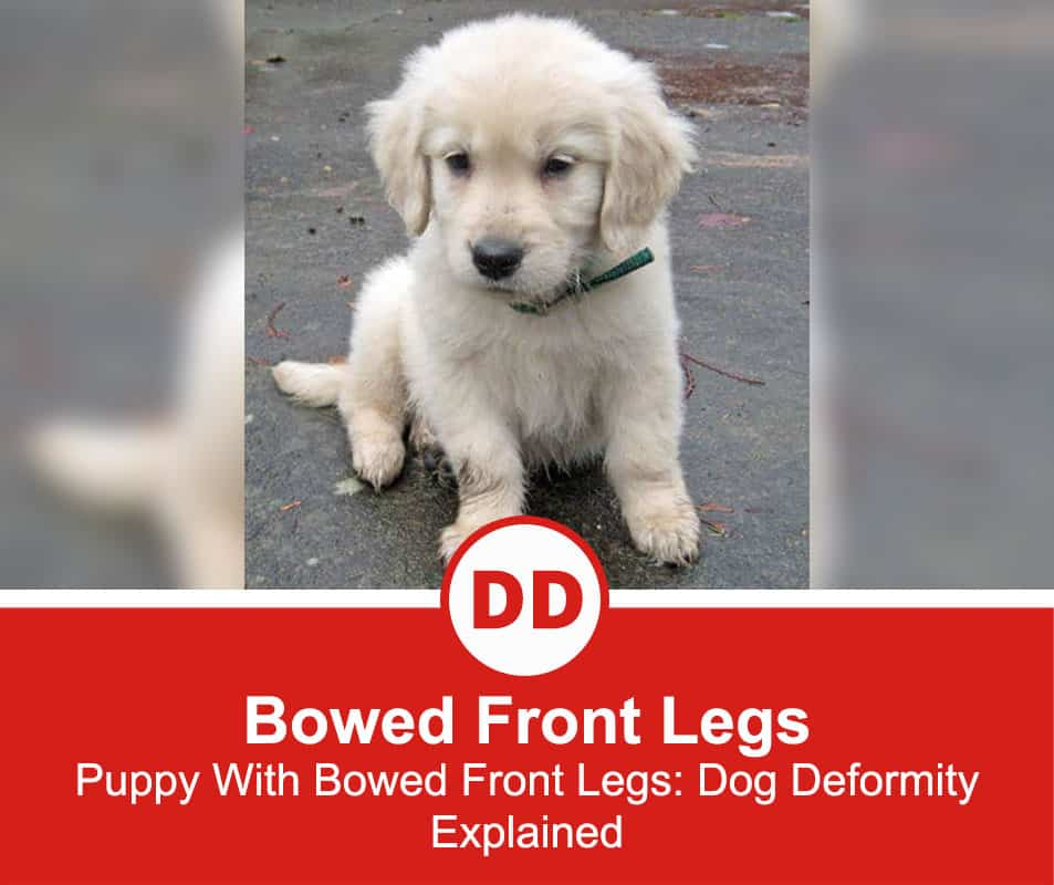 Bowed-Front-Legs