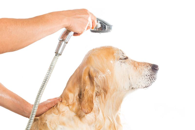How-To-Wash-You're-Golden,-The-Right-Way