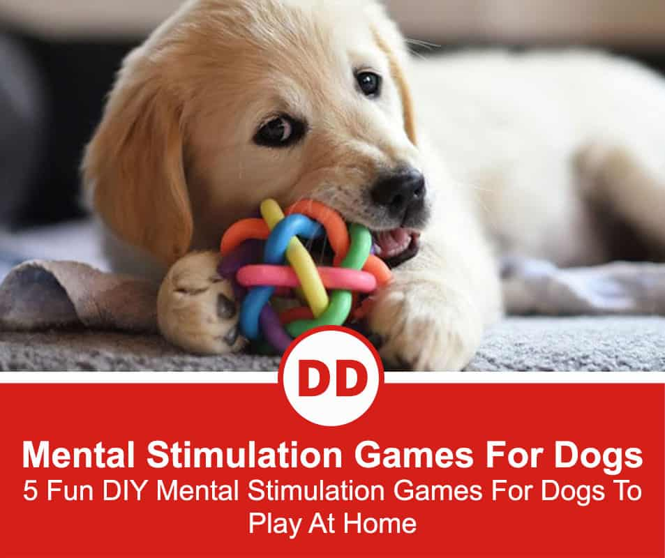 Mental-Stimulation-Games-For-Dogs