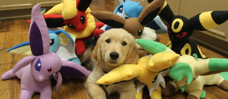 golden with lots of toys