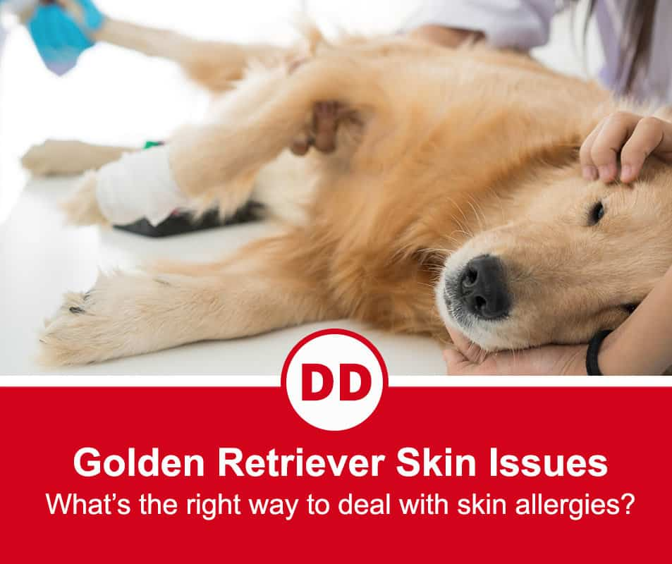 image of golden retriever with skin allergies
