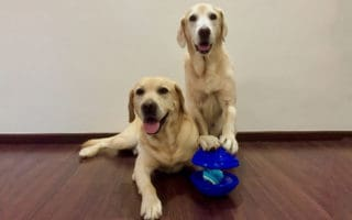 two dog with toys