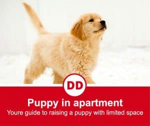 image of puppy in apartment