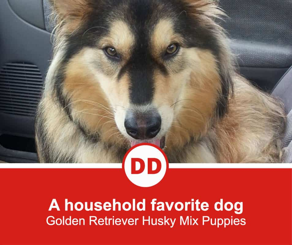A-household-favorite-dog