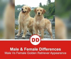 Differences-In-Male-&-Female