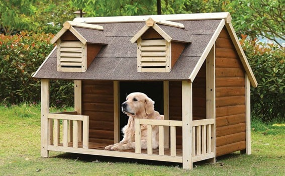 dog house outdoors