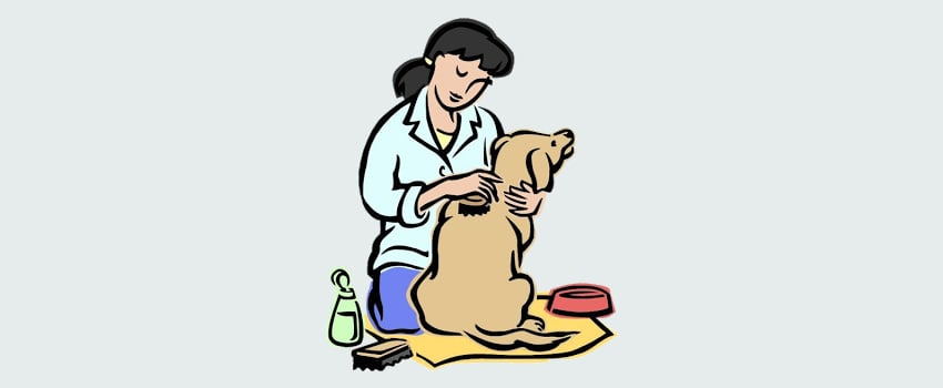 grooming a dog