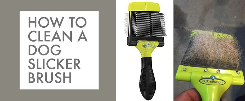 how to clean a dog slicker brush image