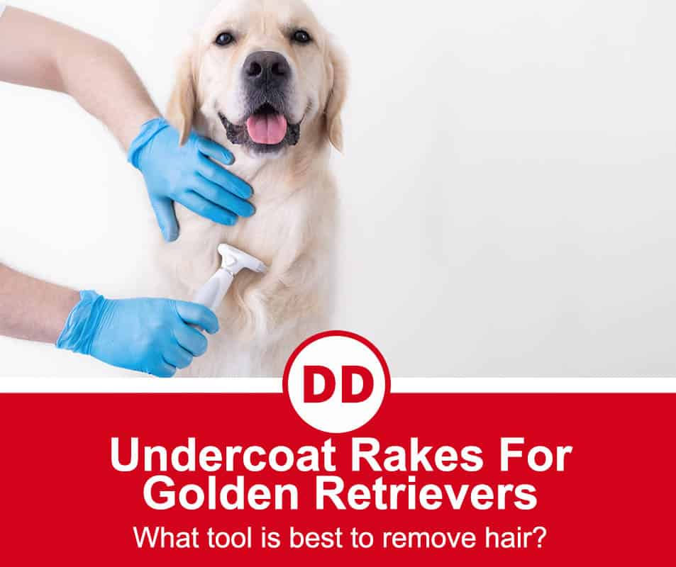 image of golden retriever being groomed with a rake