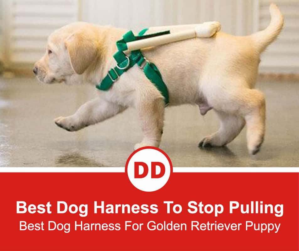 Best-Dog-Harness-To-Stop-Pulling