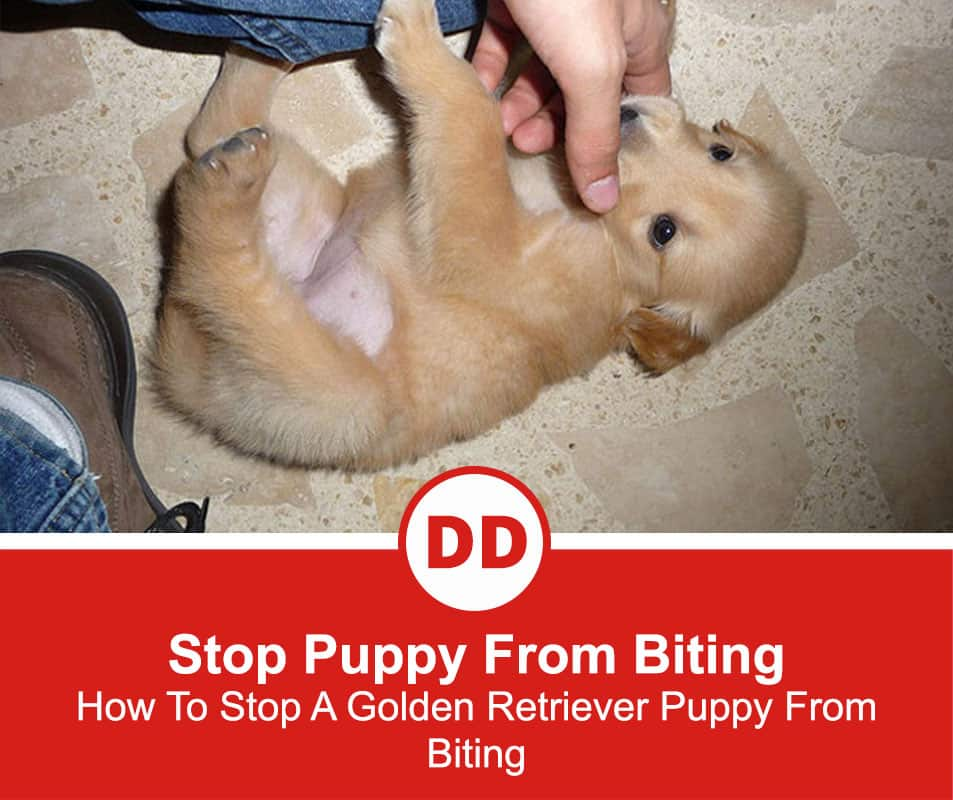 Stop-Puppy-From-Biting