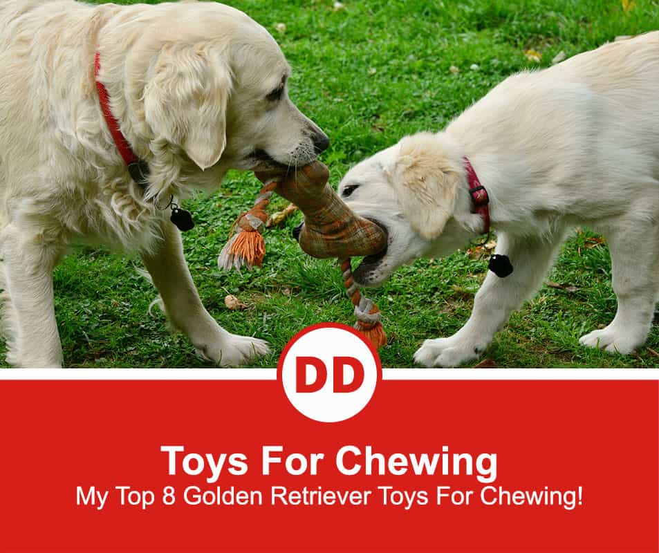 Toys-For-Chewing-new-2