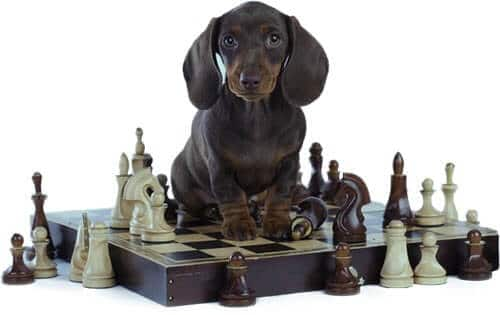 brain-training-for-dogs-reviews