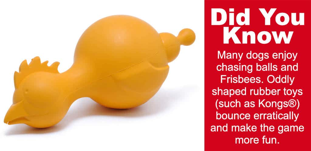 chicken chew toy for dogs