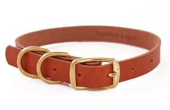 dog collar for puppies