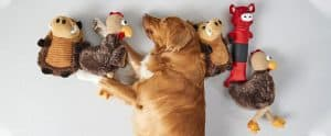 dog toy header image
