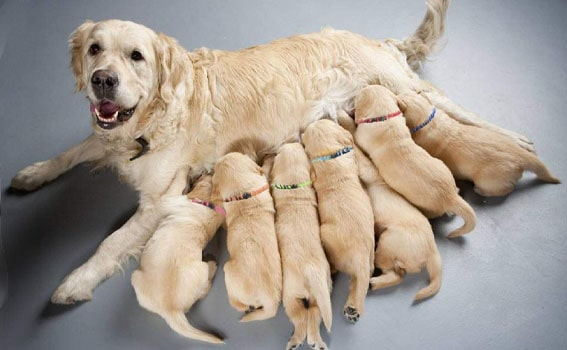 dogs with harness puppy