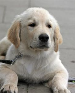 feature image of dog with collar