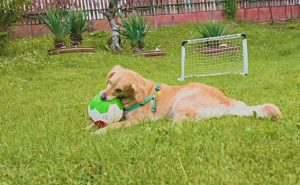 eauture image of dog with ball
