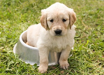 puppy on potty copy