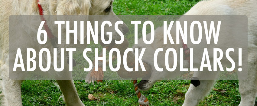 things to know about shock collars