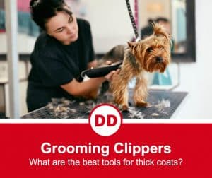 image of lady shaving dog with dog grooming clippers