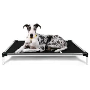 dog on chew proof bed image