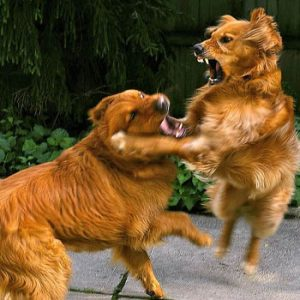 dogs fighting each other