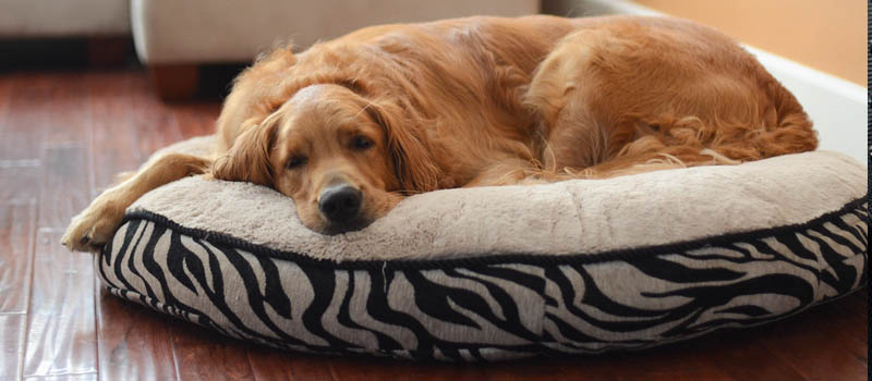 non skid dog bed image
