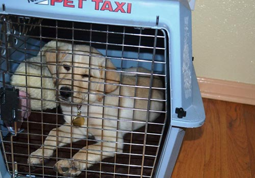 closing door on crate for dog