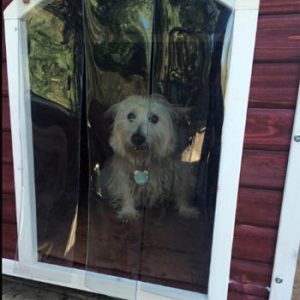 dog in outdoor house