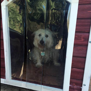 dog in outdoor house for feature image