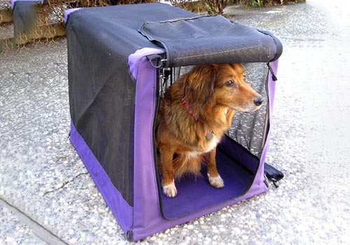 dog is soft crate