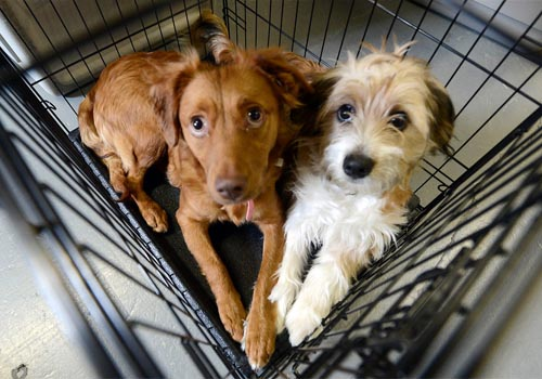 getting-dog-into-crate