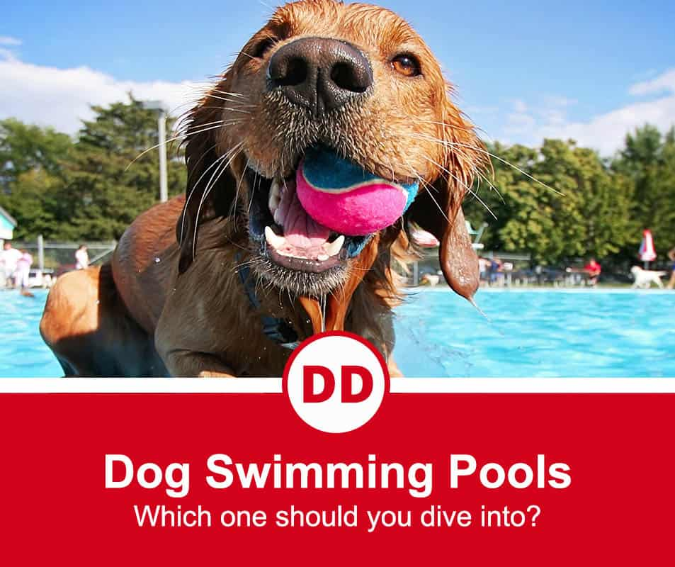 image of dog in pool