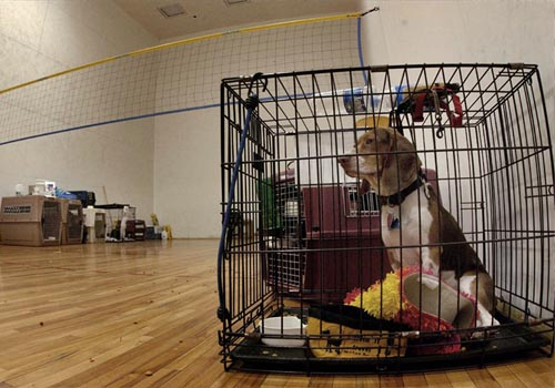 leaving dog in crate