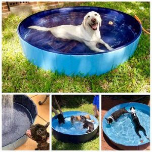 outdoor swimming pool for dogs