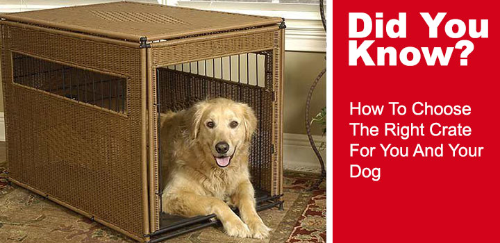 How-To-Choose-The-Right-Crate-For-You-And-Your-Dog