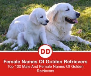 Male-And-Female-Names-Of-Golden-Retrievers