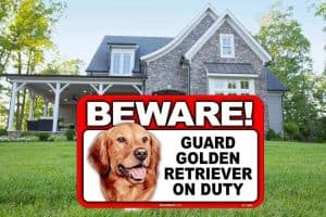 beware of golden retriever