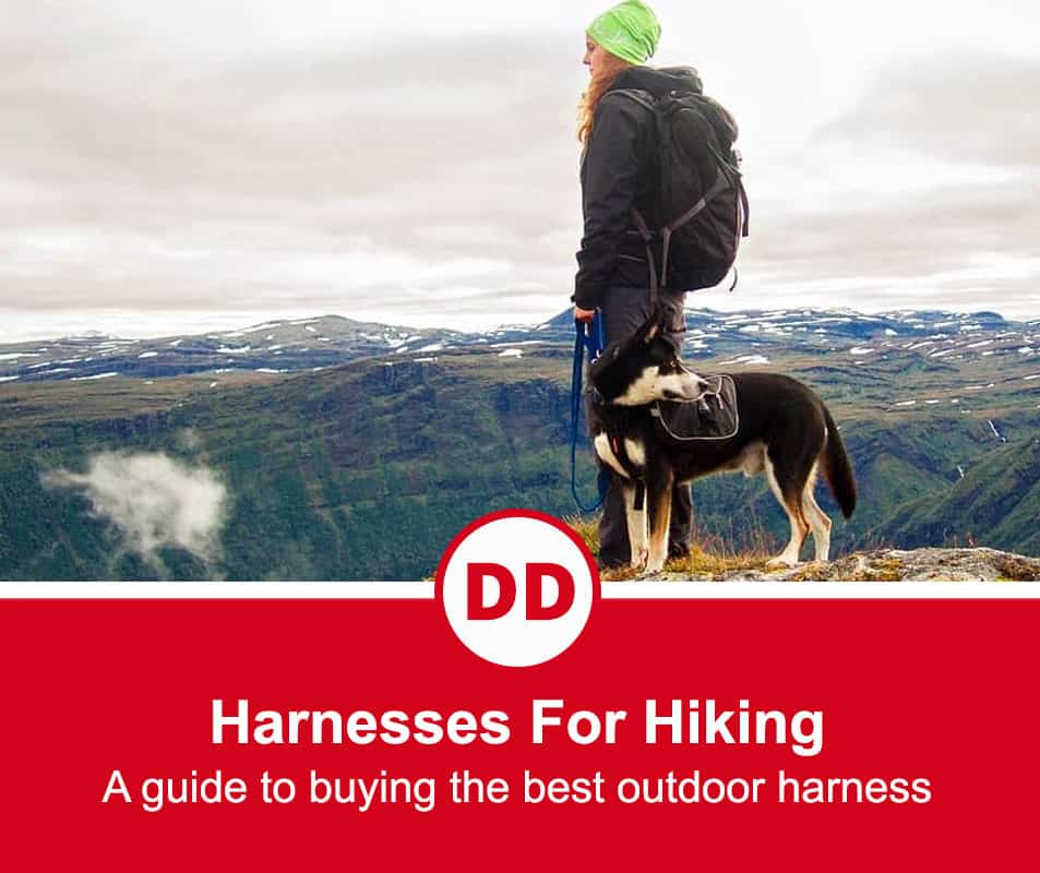 image of dog with lady out hiking