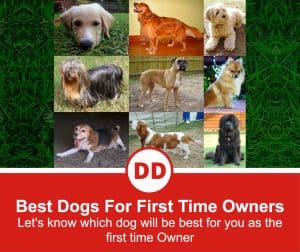 The-Best-Dogs-For-First-Time-Owners