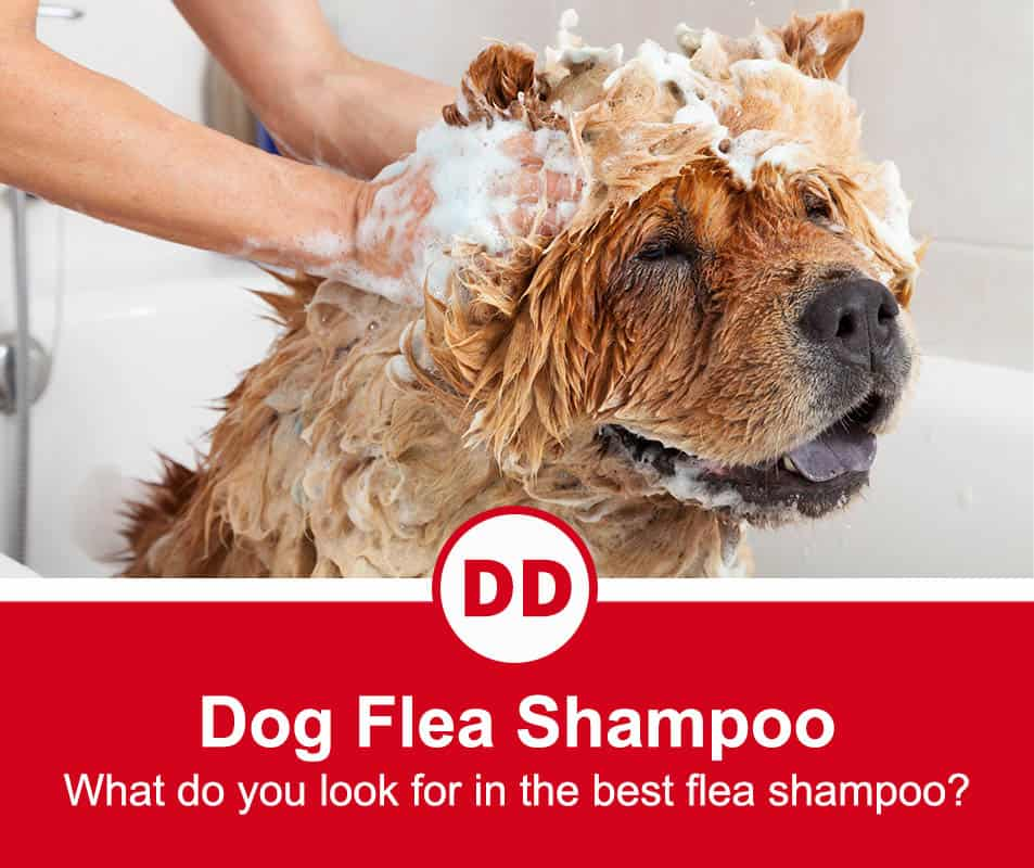 image of dog getting washed with flea shampoo and looking happy and relaxed