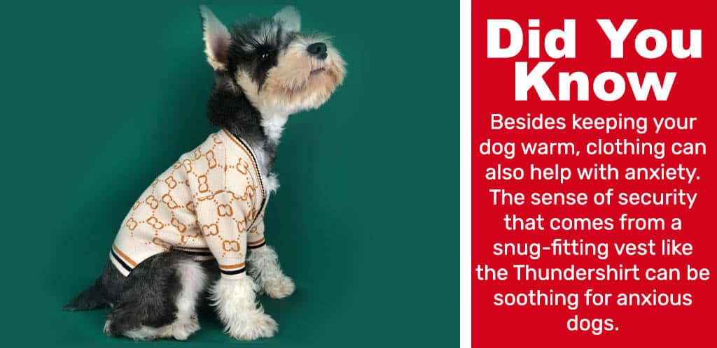 Fun fact: Besides keeping your dog warm, clothing can also help with anxiety. The sense of security that comes from a snug-fitting vest like the Thundershirt can be soothing for anxious dogs.