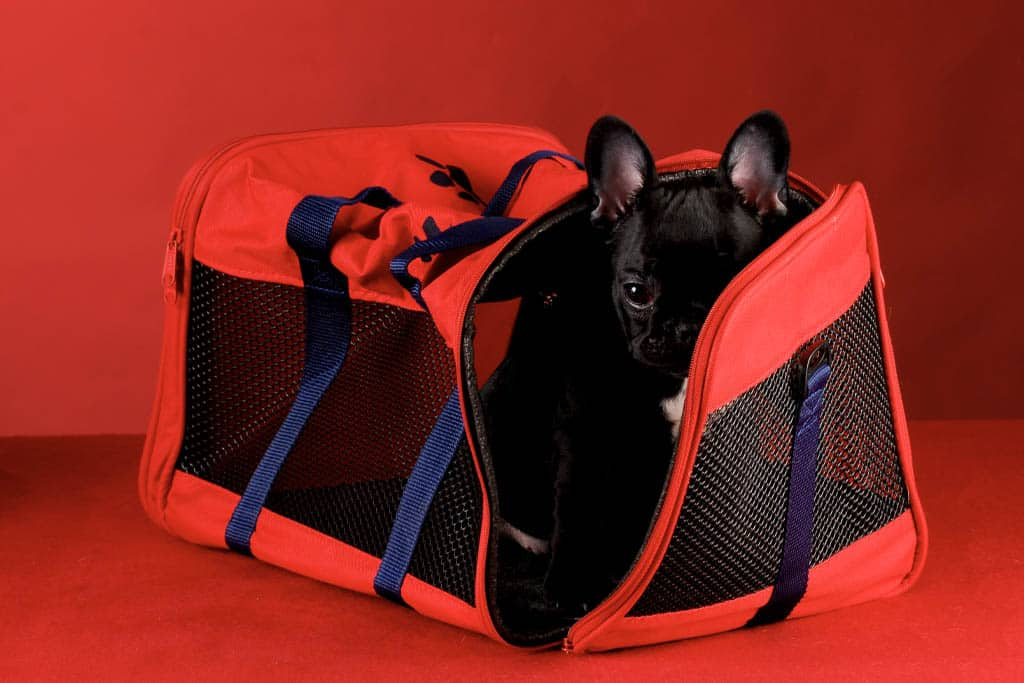 dog-in-red-bag-crate-