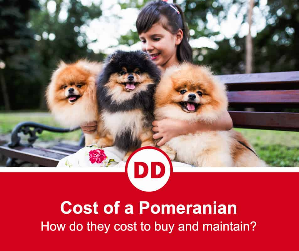 image of 3 pomeranians sitting with girl on park bench